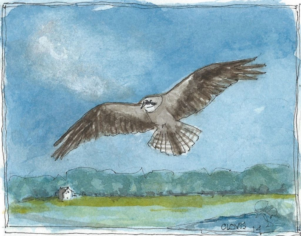 """Night Hawk,"" a Bring-a-Smile watercolor by Clovis Heimsath, artist"