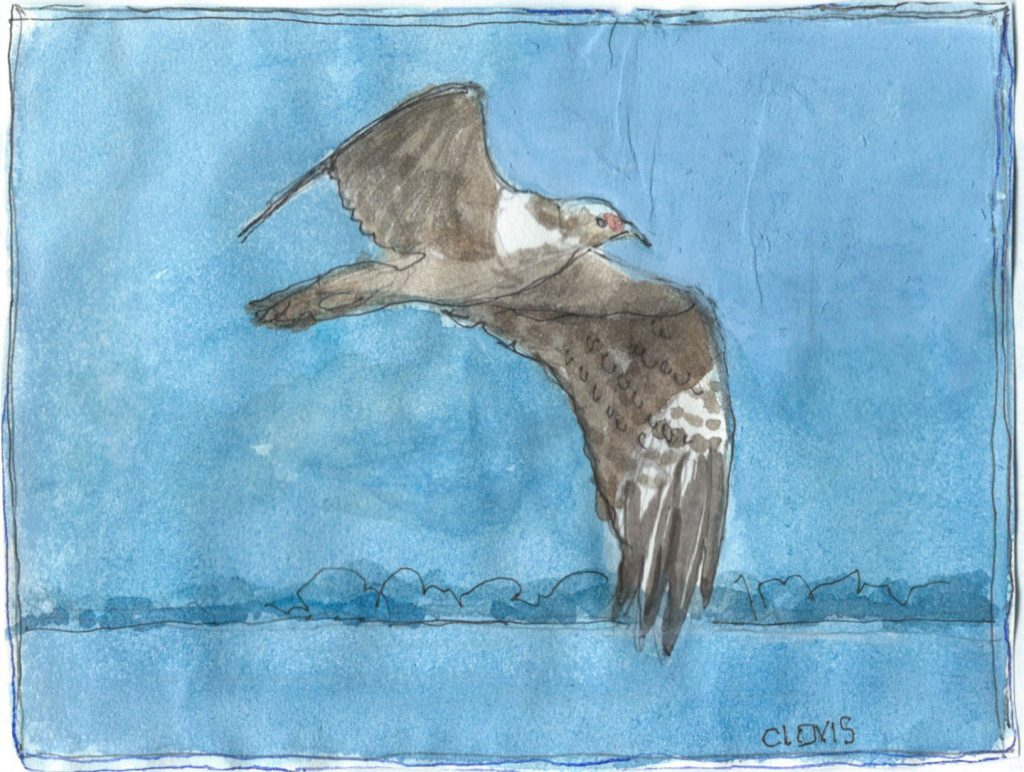 """Night Hawk 2,"" a Bring-a-Smile watercolor by Clovis Heimsath, artist"