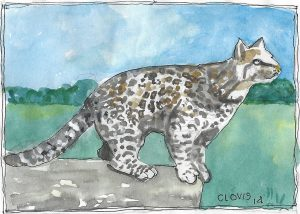 """Ocelot,"" a Bring-a-Smile watercolor by Clovis Heimsath, artist"