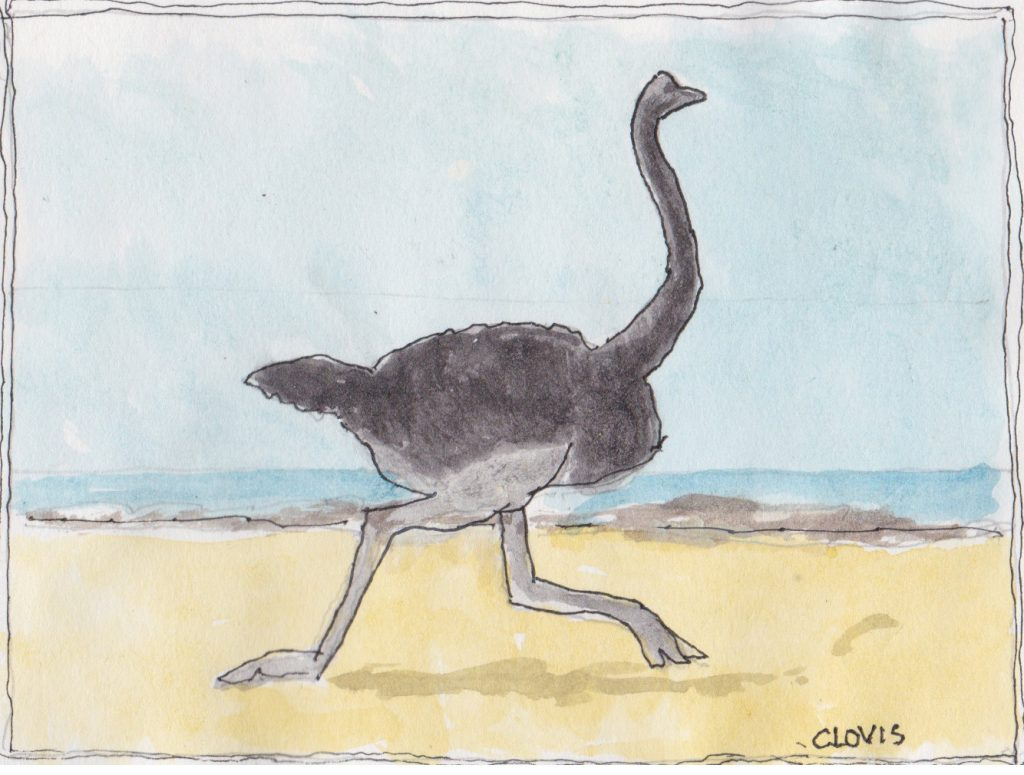 """Ostrich,"" a Bring-a-Smile watercolor by Clovis Heimsath, artist"