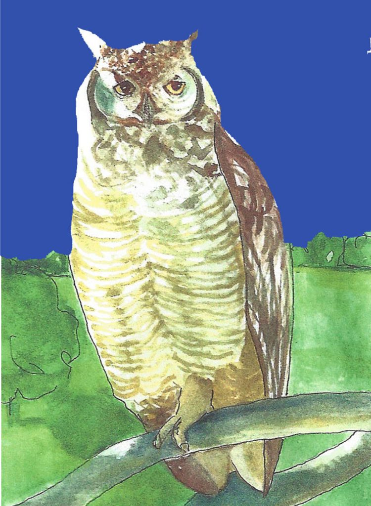 """Owl 3,"" a Bring-a-Smile watercolor by Clovis Heimsath, artist"