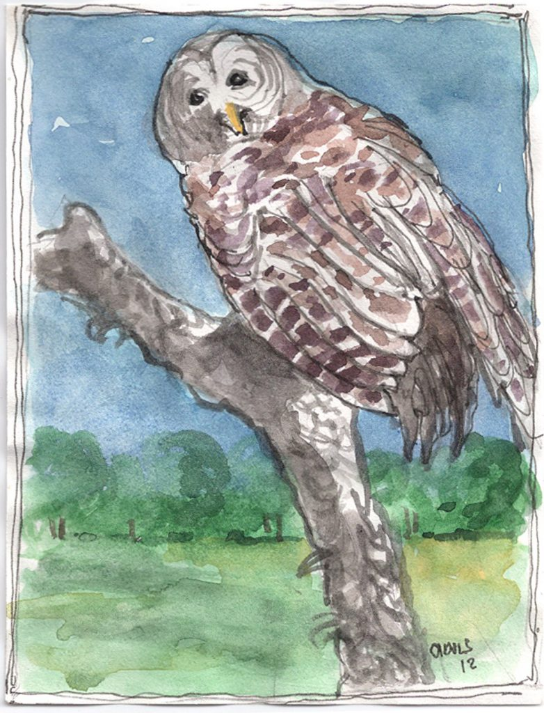 """Owl First,"" a Bring-a-Smile watercolor by Clovis Heimsath, artist"
