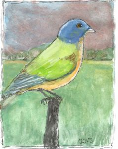 """Painted Bunting,"" a Bring-a-Smile watercolor by Clovis Heimsath, artist"