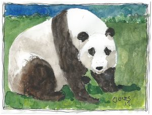 """Panda ,"" a Bring-a-Smile watercolor by Clovis Heimsath, artist"