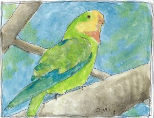 """Parakeet ,"" a Bring-a-Smile watercolor by Clovis Heimsath, artist"