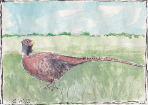 """Partridge 7,"" a Bring-a-Smile watercolor by Clovis Heimsath, artist"