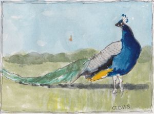 """Peacock 2,"" a Bring-a-Smile watercolor by Clovis Heimsath, artist"