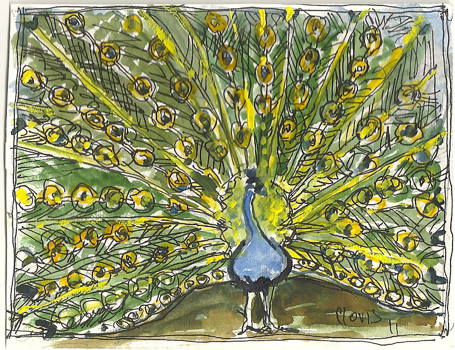 """Peacock,"" a Bring-a-Smile watercolor by Clovis Heimsath, artist"