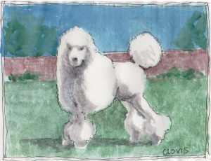"""Poodle,"" a Bring-a-Smile watercolor by Clovis Heimsath, artist"