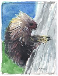"""Porcupine,"" a Bring-a-Smile watercolor by Clovis Heimsath, artist"