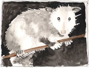 """Possum,"" a Bring-a-Smile watercolor by Clovis Heimsath, artist"