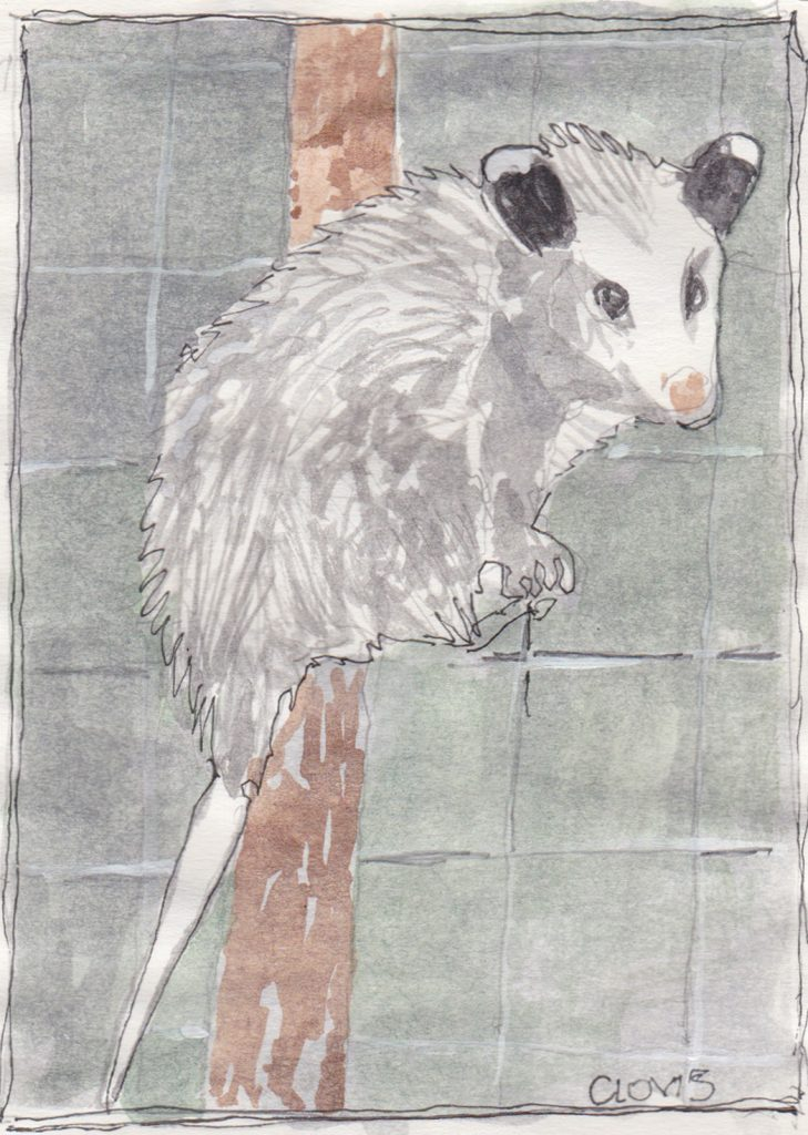 """Possum In Compost,"" a Bring-a-Smile watercolor by Clovis Heimsath, artist"