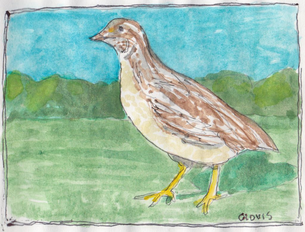 """Quail ,"" a Bring-a-Smile watercolor by Clovis Heimsath, artist"