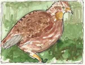 """Quail,"" a Bring-a-Smile watercolor by Clovis Heimsath, artist"
