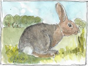 """Rabbit 2,"" a Bring-a-Smile watercolor by Clovis Heimsath, artist"