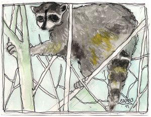 """Raccoon,"" a Bring-a-Smile watercolor by Clovis Heimsath, artist"
