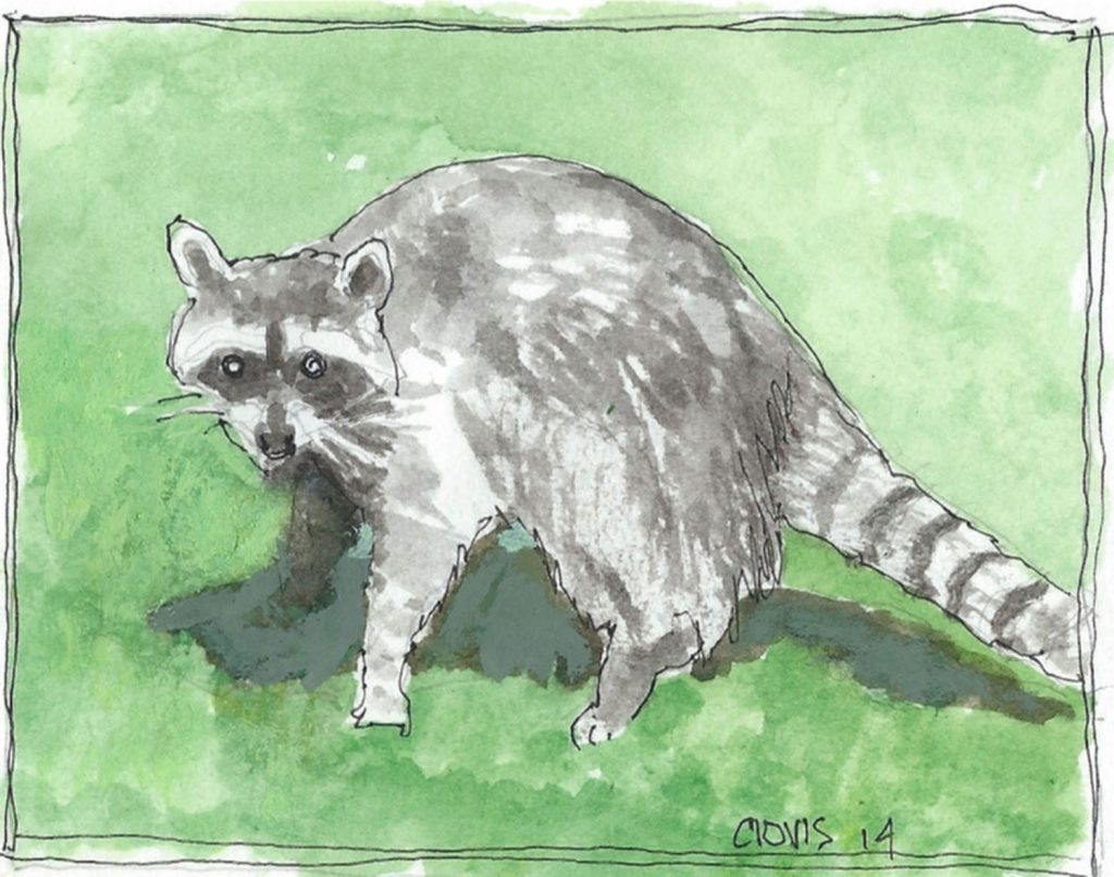 """Racoon 2,"" a Bring-a-Smile watercolor by Clovis Heimsath, artist"