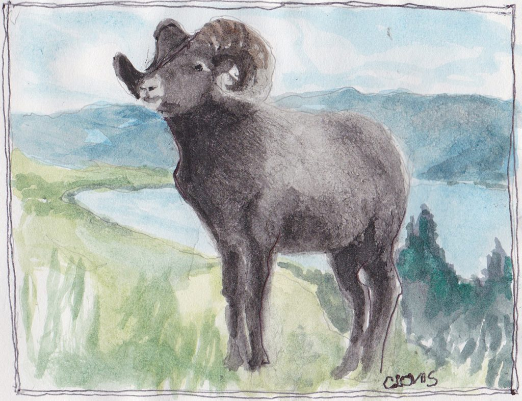 """Ram,"" a Bring-a-Smile watercolor by Clovis Heimsath, artist"