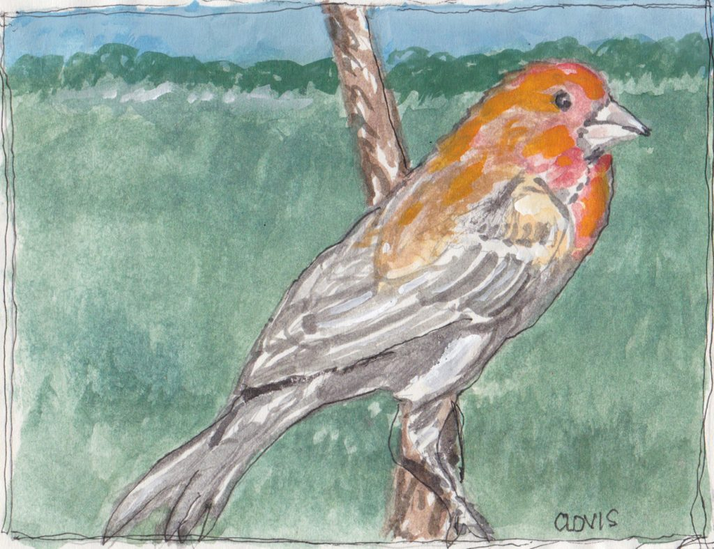 """Red Finch 2,"" a Bring-a-Smile watercolor by Clovis Heimsath, artist"