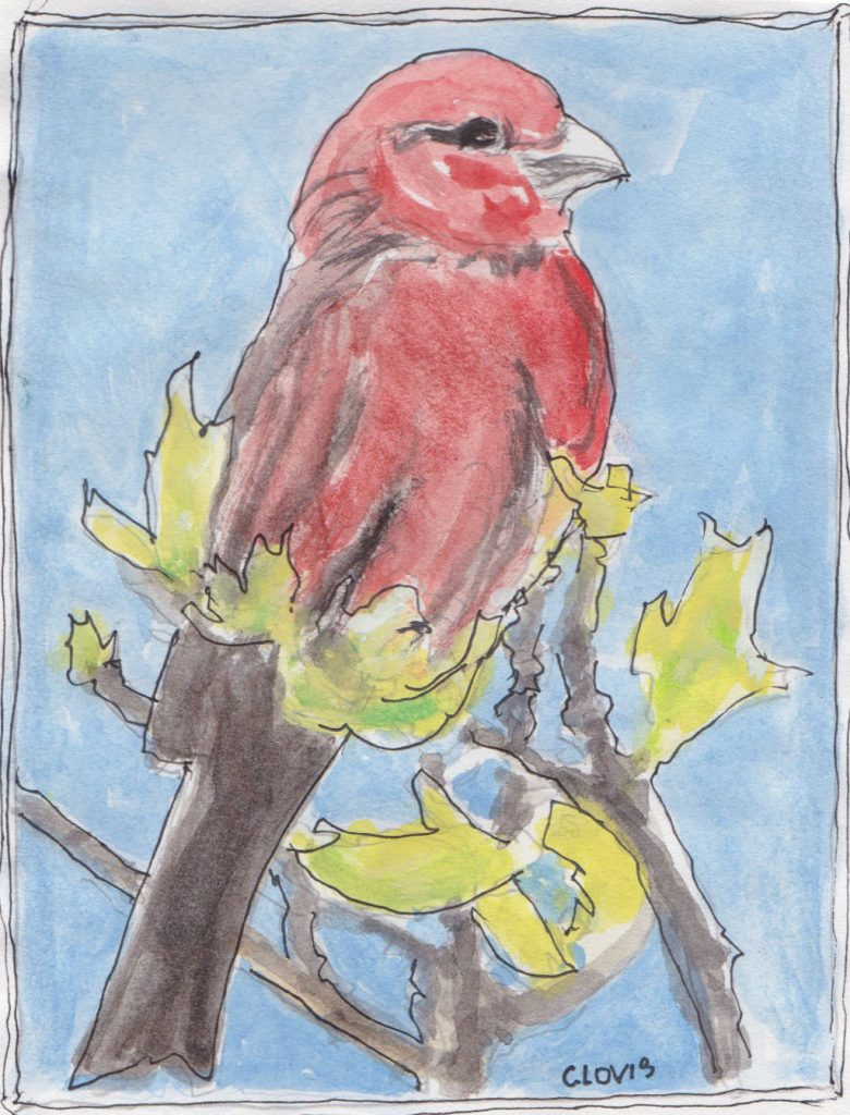 """Red Finch,"" a Bring-a-Smile watercolor by Clovis Heimsath, artist"