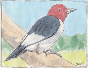 """Redheaded Woodpecker,"" a Bring-a-Smile watercolor by Clovis Heimsath, artist"