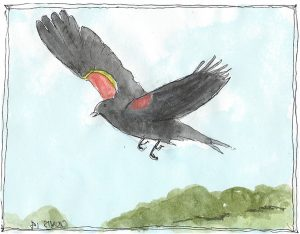 """Redwinged Blackbird,"" a Bring-a-Smile watercolor by Clovis Heimsath, artist"