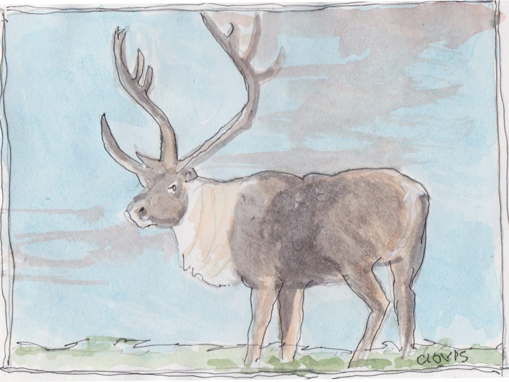 """Reindeer 3,"" a Bring-a-Smile watercolor by Clovis Heimsath, artist"