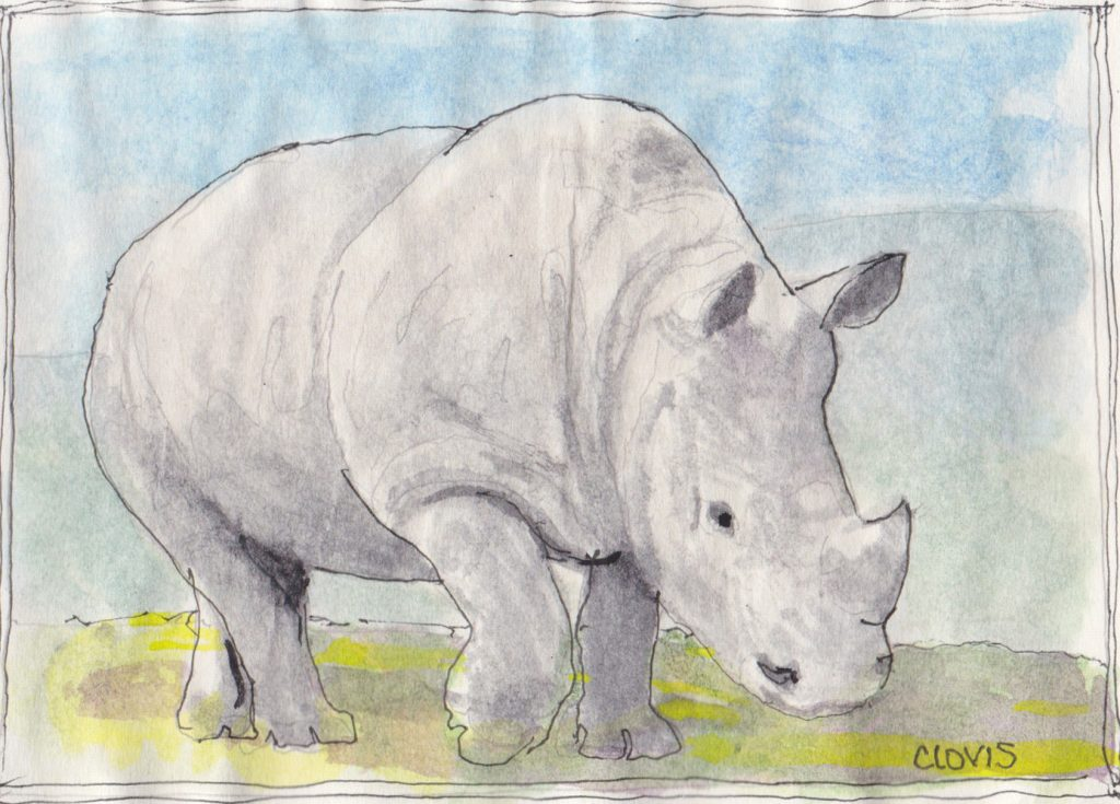 """Rhinoceros,"" a Bring-a-Smile watercolor by Clovis Heimsath, artist"