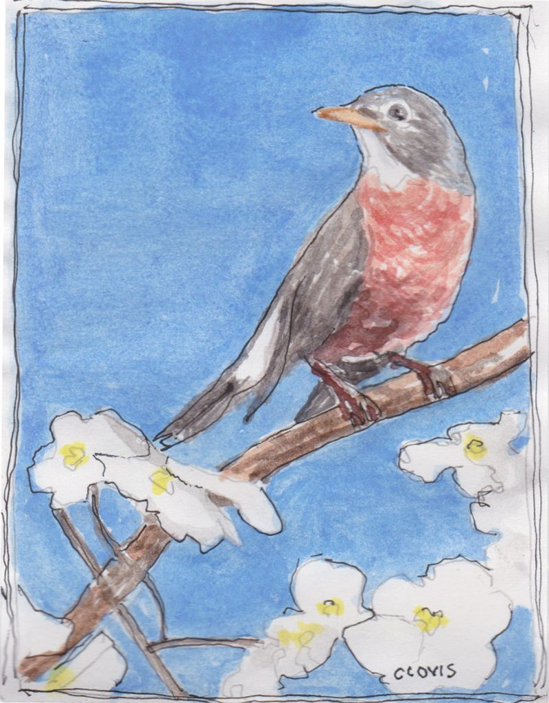 """Robin 2,"" a Bring-a-Smile watercolor by Clovis Heimsath, artist"