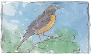 """Robin,"" a Bring-a-Smile watercolor by Clovis Heimsath, artist"