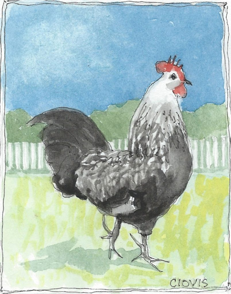 """Rooster 2,"" a Bring-a-Smile watercolor by Clovis Heimsath, artist"