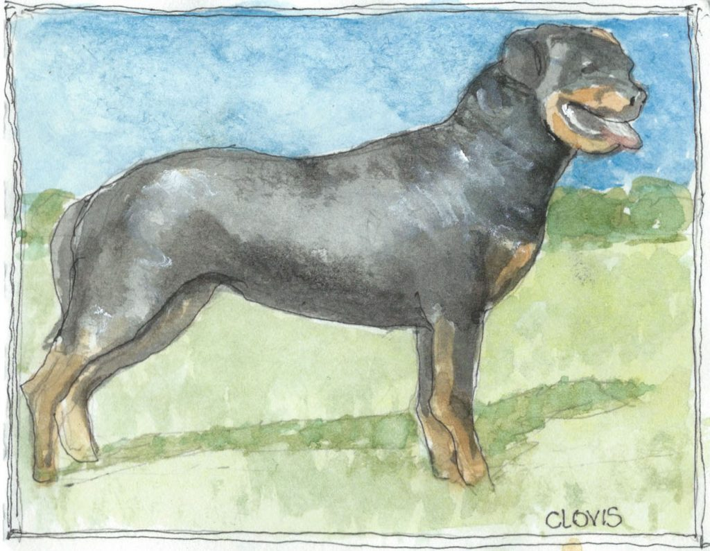 """Rotweiler 2,"" a Bring-a-Smile watercolor by Clovis Heimsath, artist"