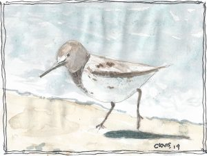 """Sandpiper,"" a Bring-a-Smile watercolor by Clovis Heimsath, artist"