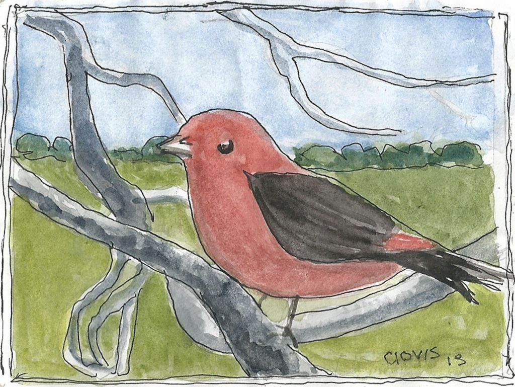"""Scarlet Tanager,"" a Bring-a-Smile watercolor by Clovis Heimsath, artist"