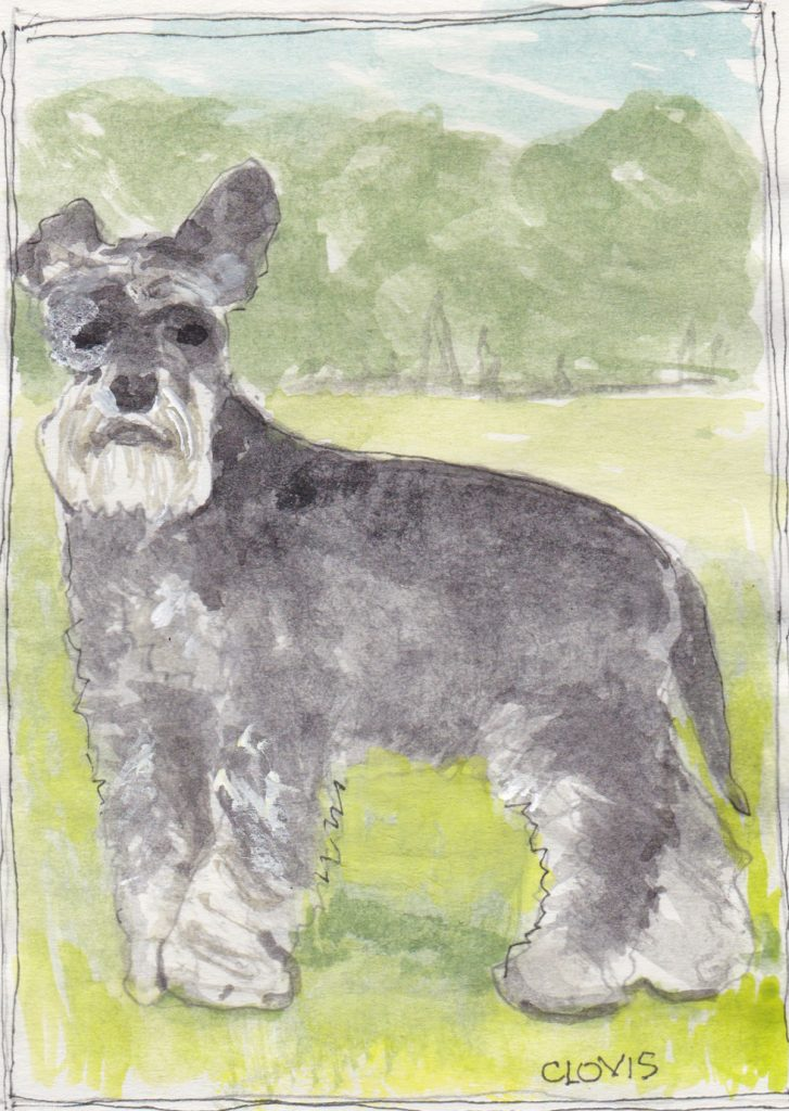 """Schnauzer 2,"" a Bring-a-Smile watercolor by Clovis Heimsath, artist"