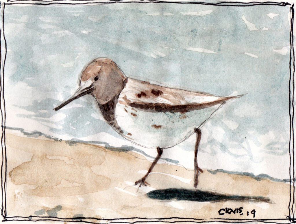 """Sea Bird ,"" a Bring-a-Smile watercolor by Clovis Heimsath, artist"