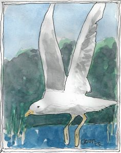"""Seagull 2,"" a Bring-a-Smile watercolor by Clovis Heimsath, artist"