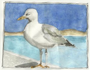 """Seagull,"" a Bring-a-Smile watercolor by Clovis Heimsath, artist"