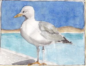 """Seagull 5,"" a Bring-a-Smile watercolor by Clovis Heimsath, artist"
