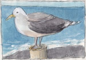 """Seagull Maine,"" a Bring-a-Smile watercolor by Clovis Heimsath, artist"