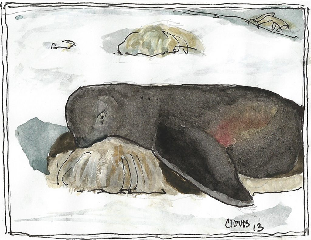 """Seal 2,"" a Bring-a-Smile watercolor by Clovis Heimsath, artist"