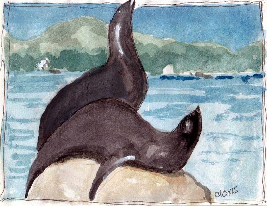 """Seals 4,"" a Bring-a-Smile watercolor by Clovis Heimsath, artist"
