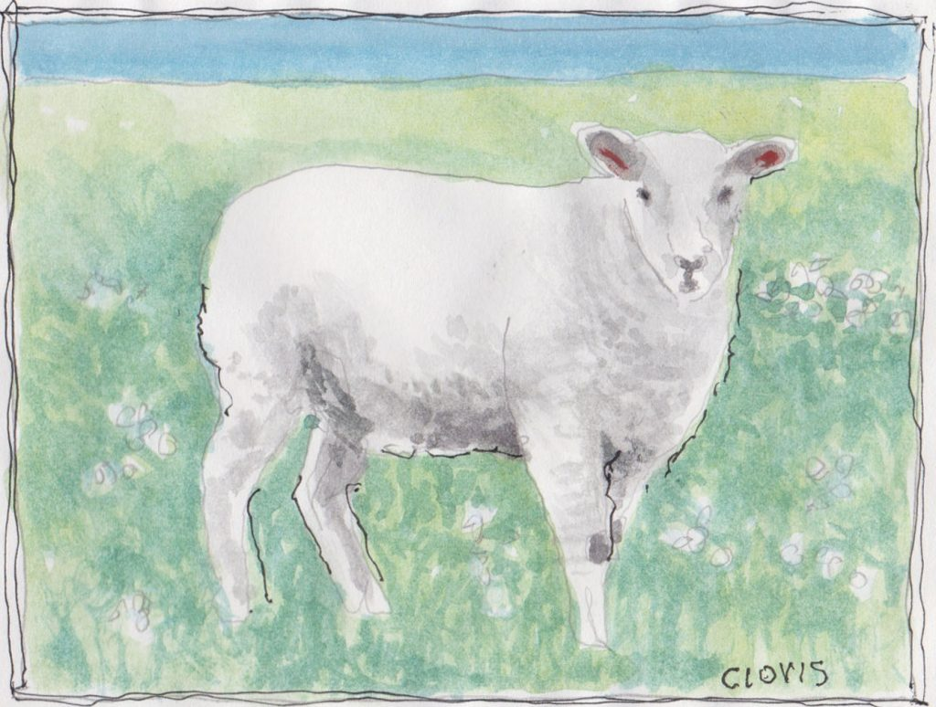 """Sheep 6,"" a Bring-a-Smile watercolor by Clovis Heimsath, artist"