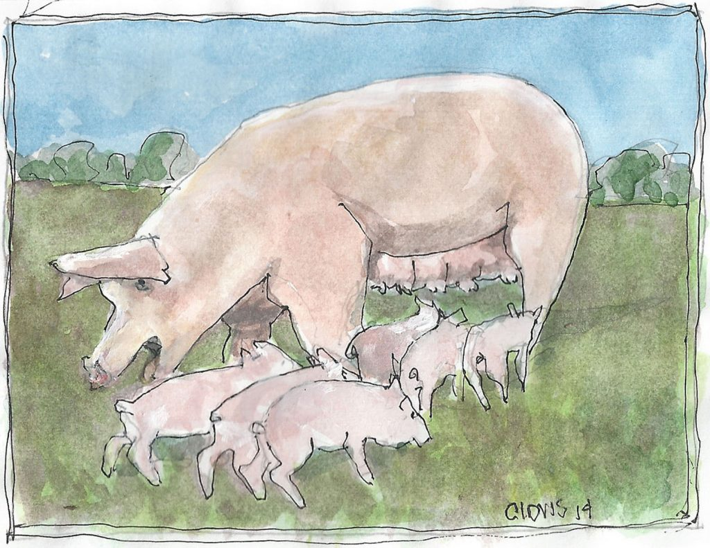 """Sow And Piglets,"" a Bring-a-Smile watercolor by Clovis Heimsath, artist"