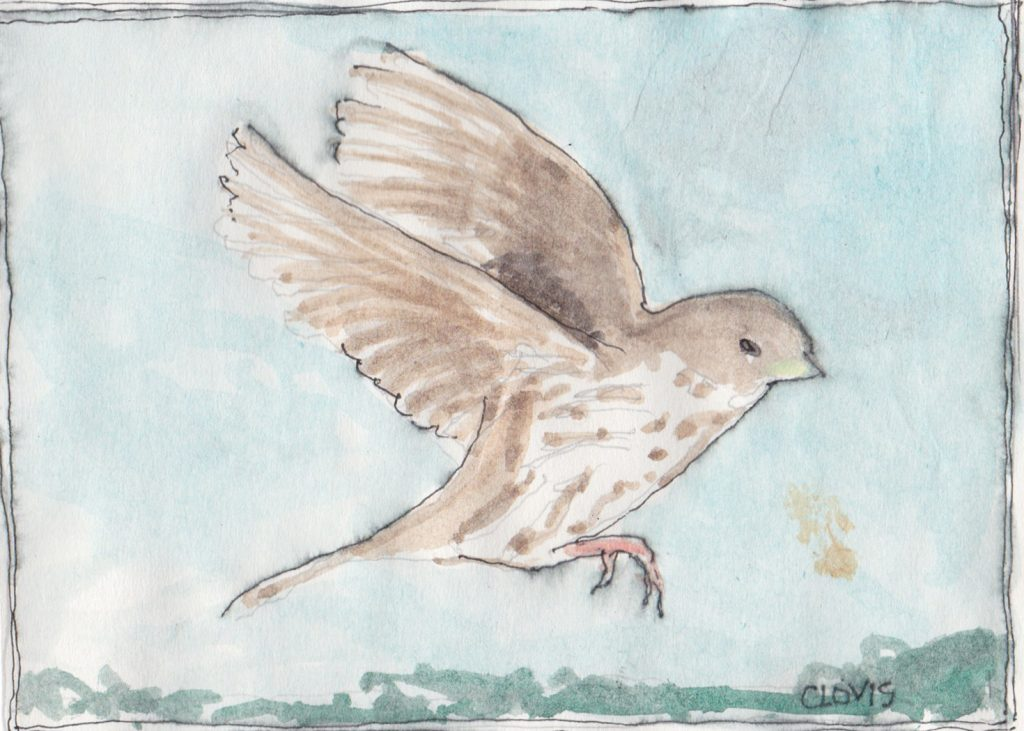 """Sparrow,"" a Bring-a-Smile watercolor by Clovis Heimsath, artist"