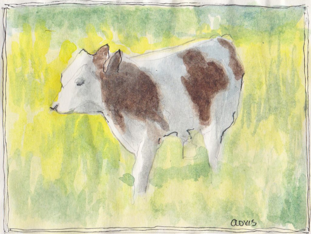 """Spotted Calf,"" a Bring-a-Smile watercolor by Clovis Heimsath, artist"