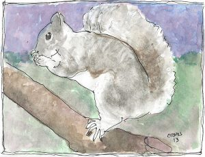 """Squirrel 3,"" a Bring-a-Smile watercolor by Clovis Heimsath, artist"