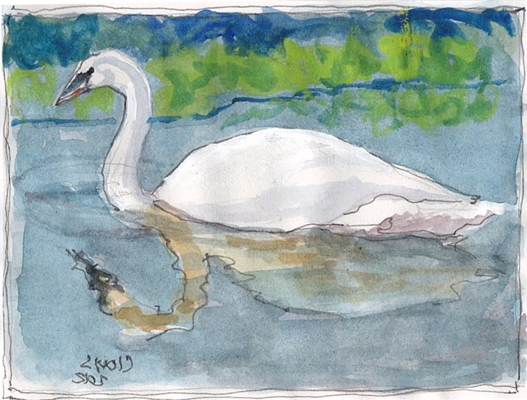 """Swan,"" a Bring-a-Smile watercolor by Clovis Heimsath, artist"