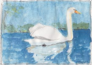 """Swan 2,"" a Bring-a-Smile watercolor by Clovis Heimsath, artist"