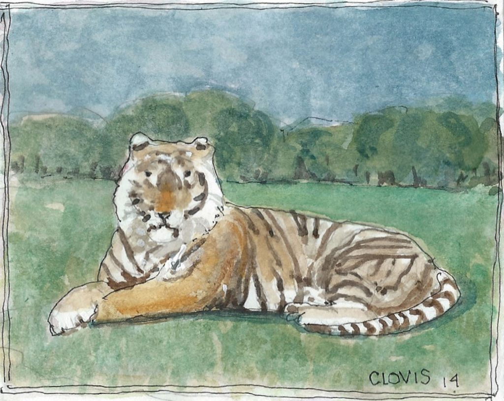 """Tiger ,"" a Bring-a-Smile watercolor by Clovis Heimsath, artist"